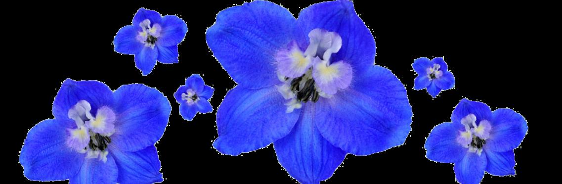 floresbottom